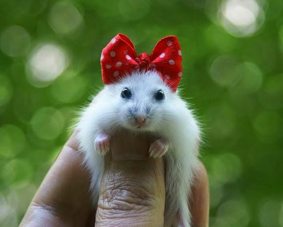 l hamster