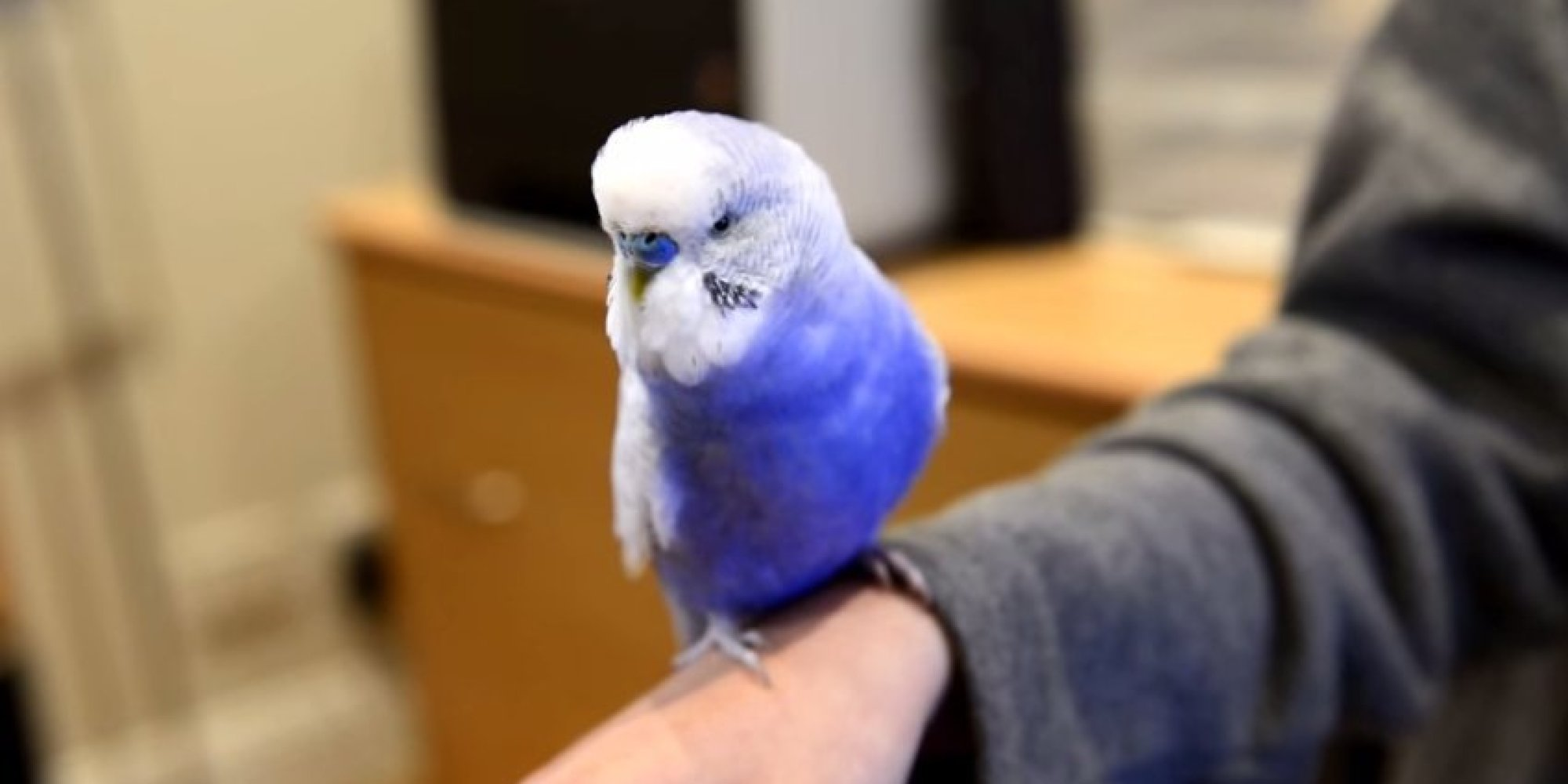 o BLUEY BUDGIE R2D2 facebook