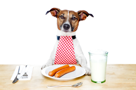 photodune 1746707 dog at table xs