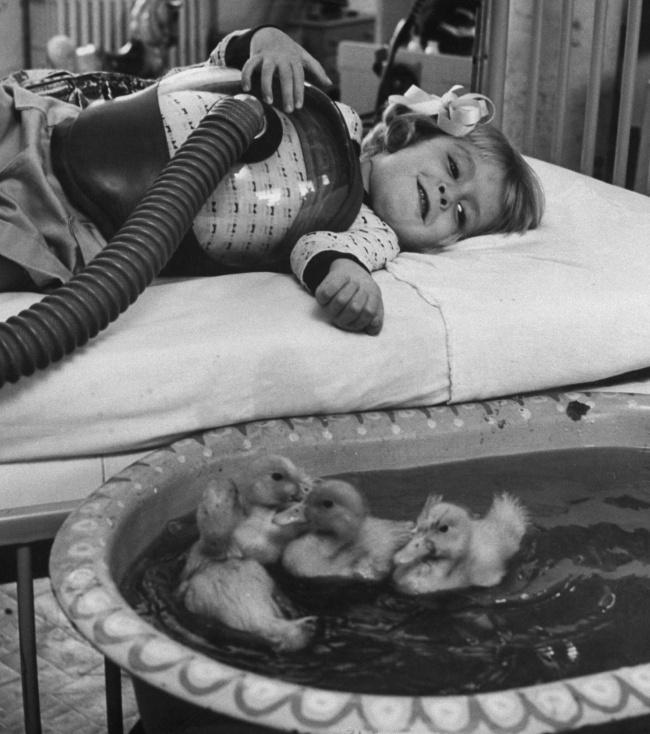 830105 650 1449557834 les animaux etaient utilises en tant que therapie infantile dans les hopitaux americains en 1956 164467 wide