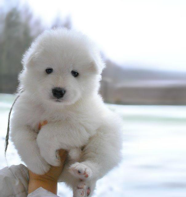 717755 605 1445936187chubby puppies bear cub look alikes 14 605