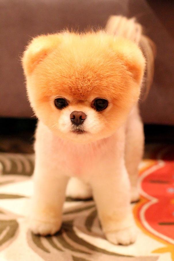 718455 605 1445936187chubby puppies bear cub look alikes 8 605