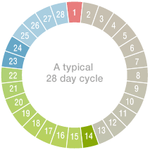 typical cycle