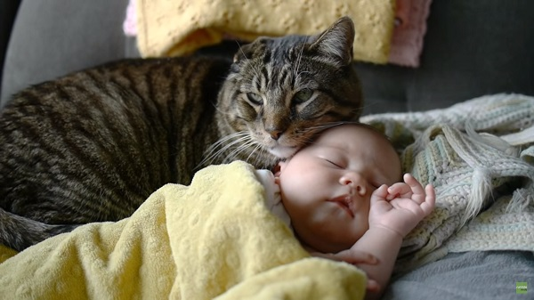 babywithcat