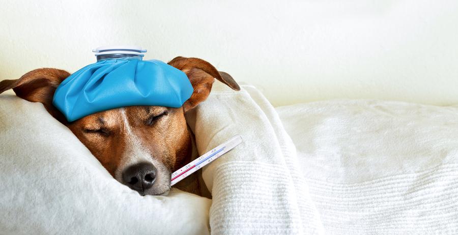 skylos me gripi 1