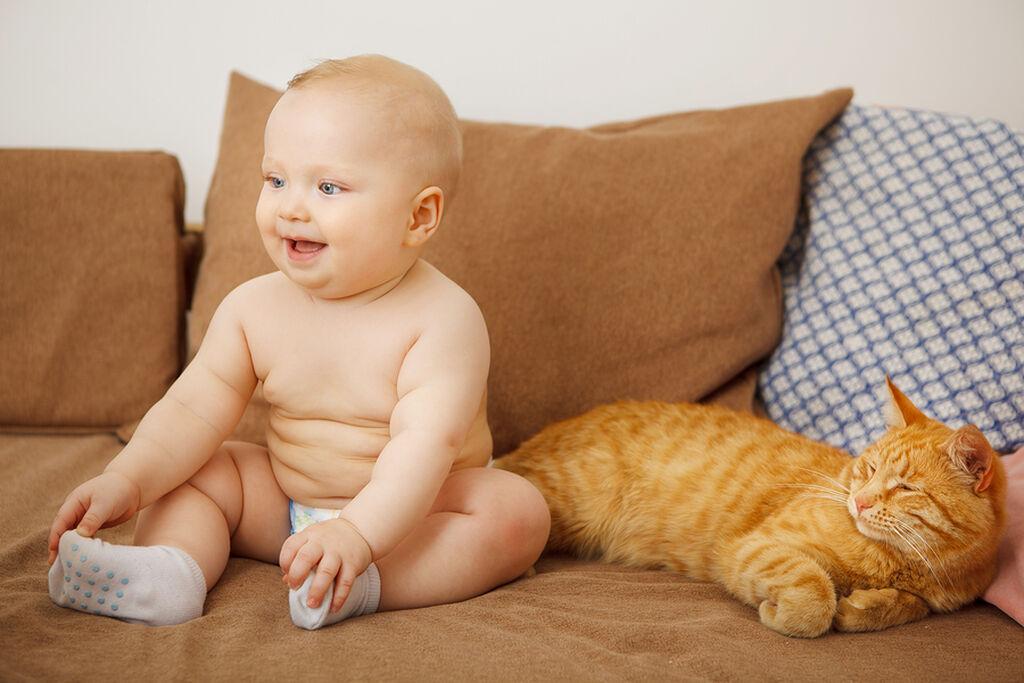 3d62450a145 Εξι μύθοι για τις γάτες και τα μωρά - Mothersblog.gr