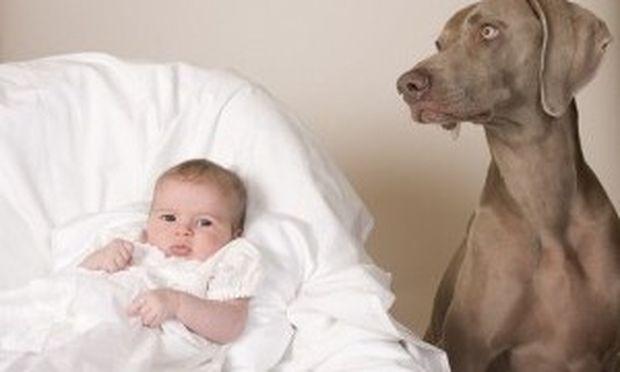 Σκυλιά και παιδιά, πώς μπορούν να συνυπάρξουν;