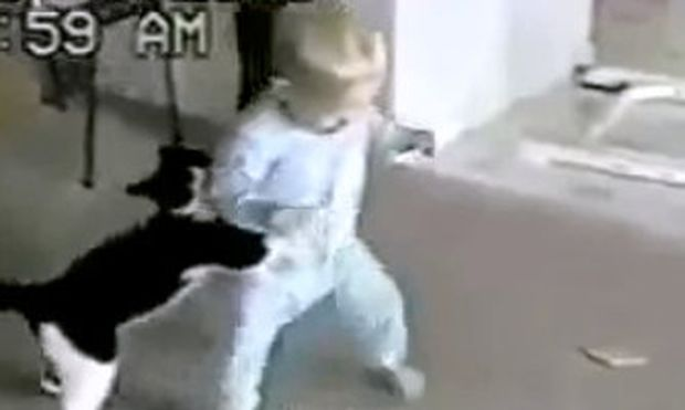 Αστείο βίντεο: Παιχνίδια ενός μπόμπιρα με μια γάτα