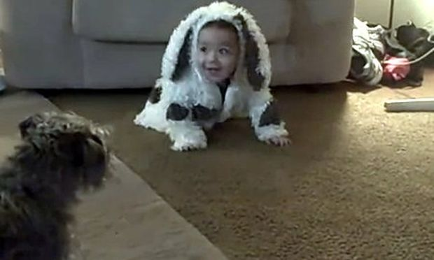 Σκύλος καταδιώκει μωρό γιατί το περνά για... σκύλο!