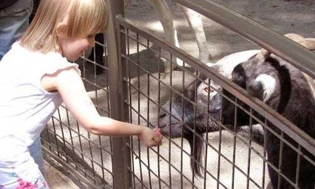 Μια βόλτα στο ζωολογικό κήπο!