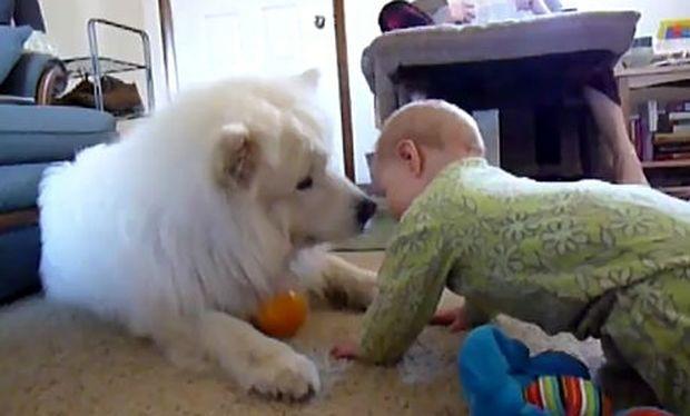 Βίντεο: Σκύλος και μωρό γίνονται οι καλύτεροι φίλοι!