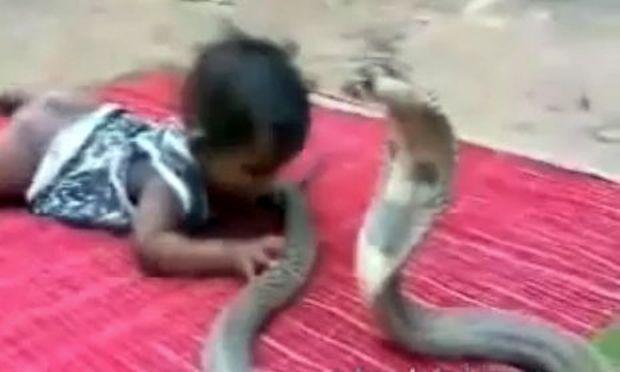 Βίντεο: Ένα μωρό συναντά μια κόμπρα