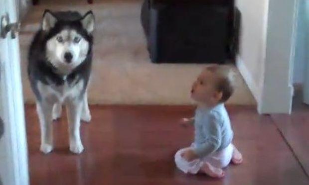 Βίντεο: Η... κουβέντα ενός μωρού με ένα χάσκι!