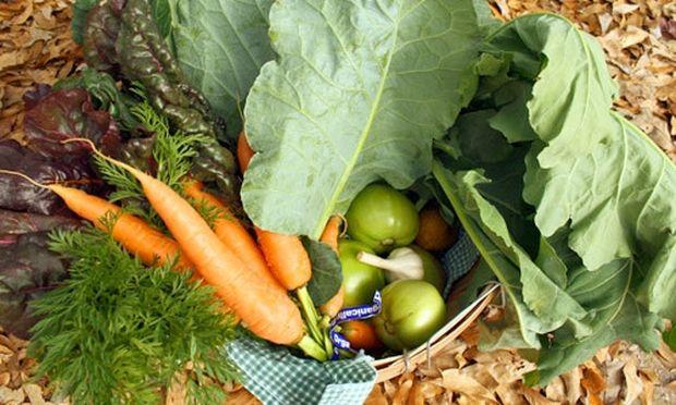Πάρτι λαχανικών στον κήπο