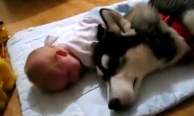 Βίντεο: Πώς ένας σκύλος προσπαθεί να κάνει ένα μωρό να σταματήσει να κλαίει!