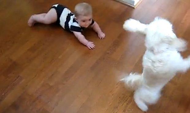 Βίντεο: Το σκυλάκι χορεύει και το μωρό γελάει!