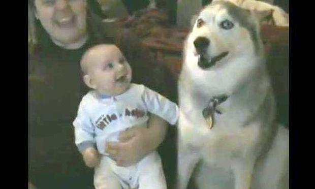 Το Χάσκι «μιλάει» και το μωρό γελάει! (Απολαυστικό βίντεο)