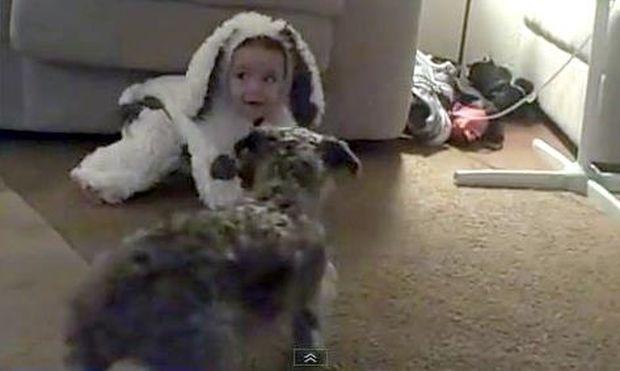 Πώς μια στολή μωρού, μπέρδεψε τον σκύλο!