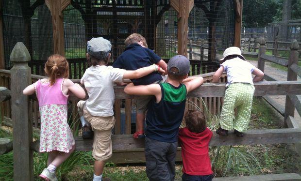 Με το παιδί σας στον ζωολογικό κήπο, τι πρέπει να προσέξετε