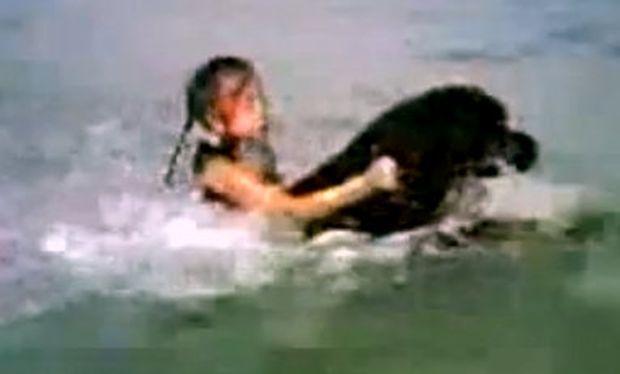 Βίντεο: Ροντβάιλερ κουβαλάει κολυμπώντας ένα κοριτσάκι!