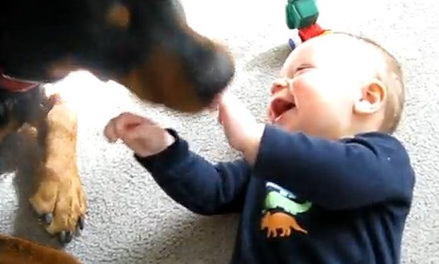 Βίντεο: Όταν ένα σκύλος προκαλεί νευρικό γέλιο στο μωρό!