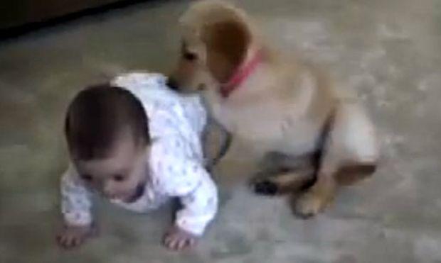 Βίντεο: Η πιο γλυκιά εικόνα: Μωρό και κουτάβι παίζουν χαρούμενα