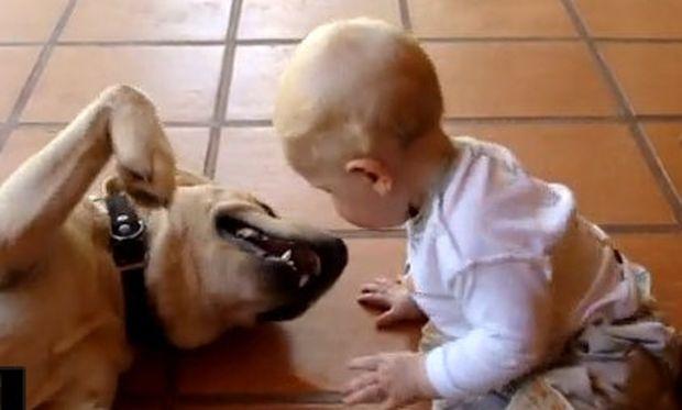 Βίντεο: Ο «έρωτας» ενός λαμπραντόρ με ένα μωρό!