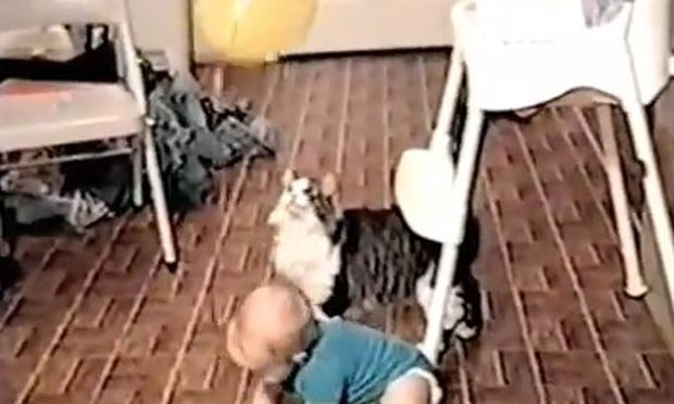 Βίντεο: Γάτα προσπαθεί να πάρει το μπαλόνι του μωρού
