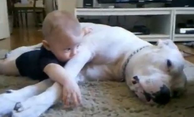 Βίντεο: Το πιο τρυφερό βίντεο με παιδί και σκύλο!