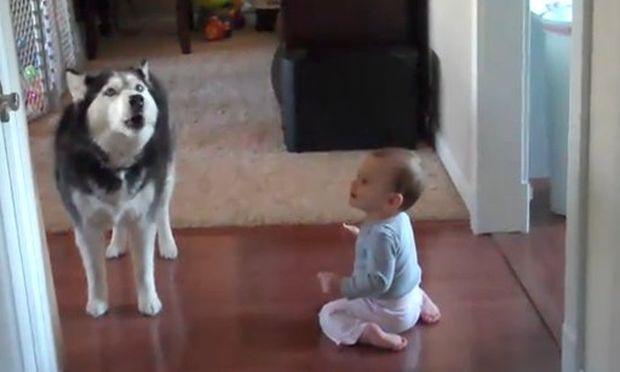 Βίντεο: Όταν ο σκύλος τραγουδά με το μωρό!