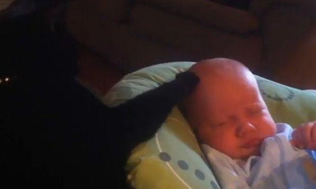 Βίντεο: Γάτα βάζει το μωρό για ύπνο!