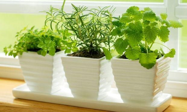 Φτιάξτε ένα κήπο μέσα στο σπίτι σας