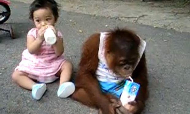 Βίντεο: Ο καθένας το γάλα του!