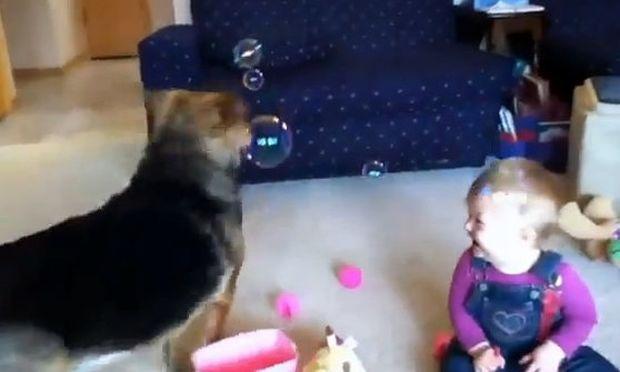Βίντεο: Όταν τα μωρά διασκεδάζουν με τους σκύλους!