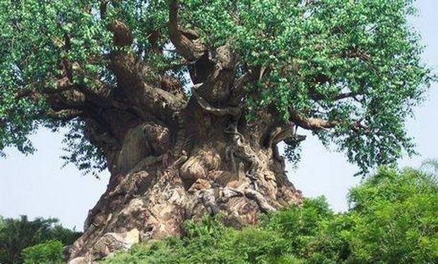 Αληθινή ιστορία: Γέννησε το μωρό της πάνω στα κλαδιά ενός δέντρου!