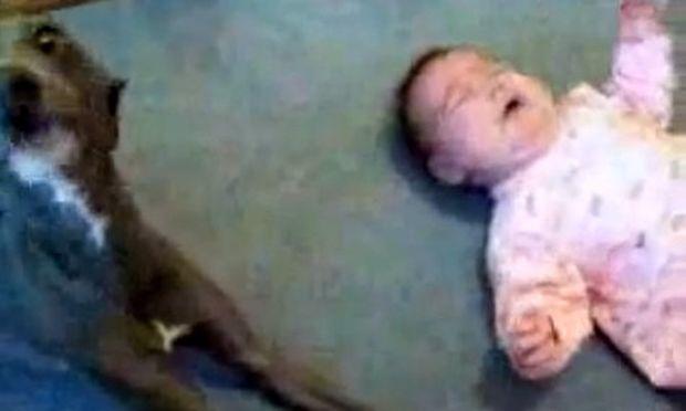 Βίντεο: Το μωρό κλαίει και ο σκύλος μιμείται το κλάμα του