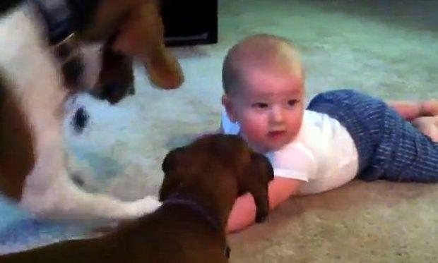 Βίντεο: Ένα μωρό αντιμέτωπο με δύο σκύλους!