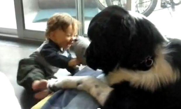 Βίντεο: To υστερικό γέλιο ενός μωρού συντροφιά με έναν σκύλο!