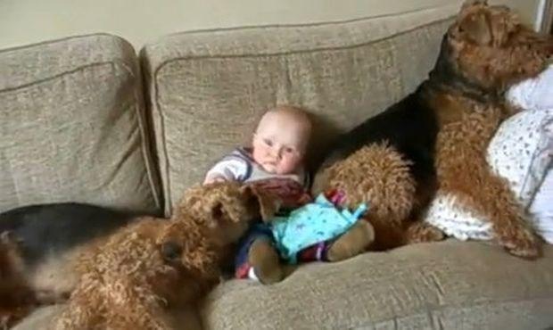 Βίντεο: Μωρό έξι μηνών χαλαρώνει ανάμεσα σε δύο Τεριέ!