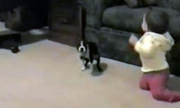 Βίντεο: Κάνει τα πρώτα της βήματα και μπαίνει στα πόδια της ένα κουτάβι!