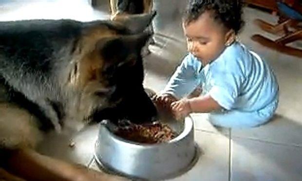 """Απίστευτη """"διαμάχη"""" μωρού και σκύλου για ένα μπολ φαγητού!"""