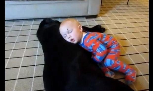 Τρελαίνεται να κοιμάται πάνω στο σκύλο!
