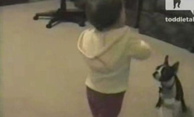 Βίντεο: Δείτε πώς αντιδρά ο σκύλος όταν βλέπει το μωρό να περπατά!