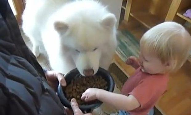 Βίντεο: Όταν το μωρό ταΐζει τον σκύλο!