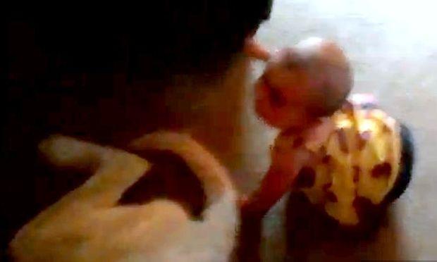 Βίντεο: Τρώει... κλωτσιά από σκύλο!