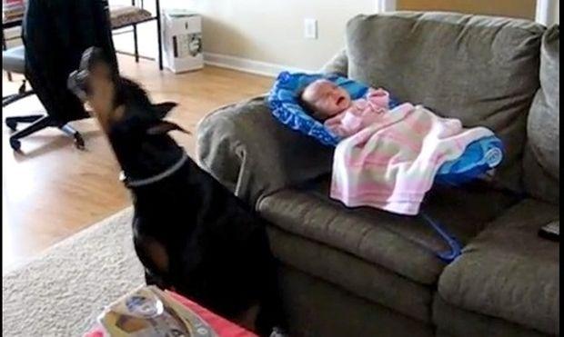 Κλαίει το μωρό; Κλαίει και το σκυλί σε άψογο συγχρονισμό!