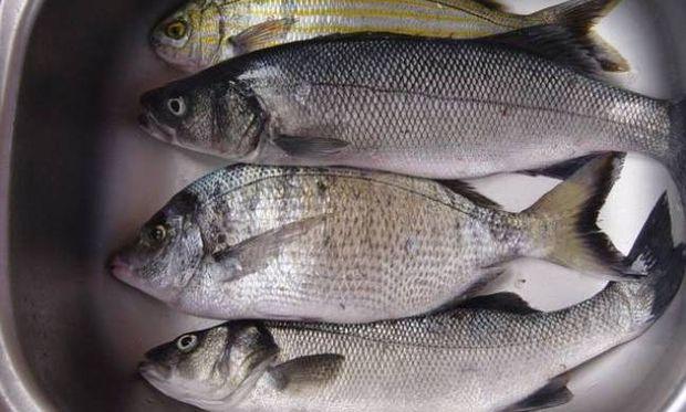 Τα ψάρια καταπολεμούν τον καρκίνο του μαστού