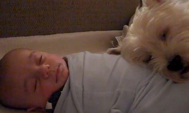 Μωρό και σκύλος κοιμούνται μαζί! (βίντεο)