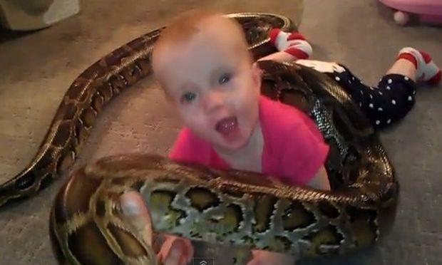 Τι πιο φυσιολογικό από το να παίζει ένα μωρό με ένα τεράστιο φίδι; (Αληθινό βίντεο)