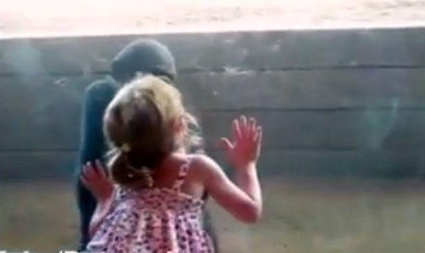 Το πιο γλυκό φιλί ενός κοριτσιού σε έναν μικρό γορίλα! (βίντεο)